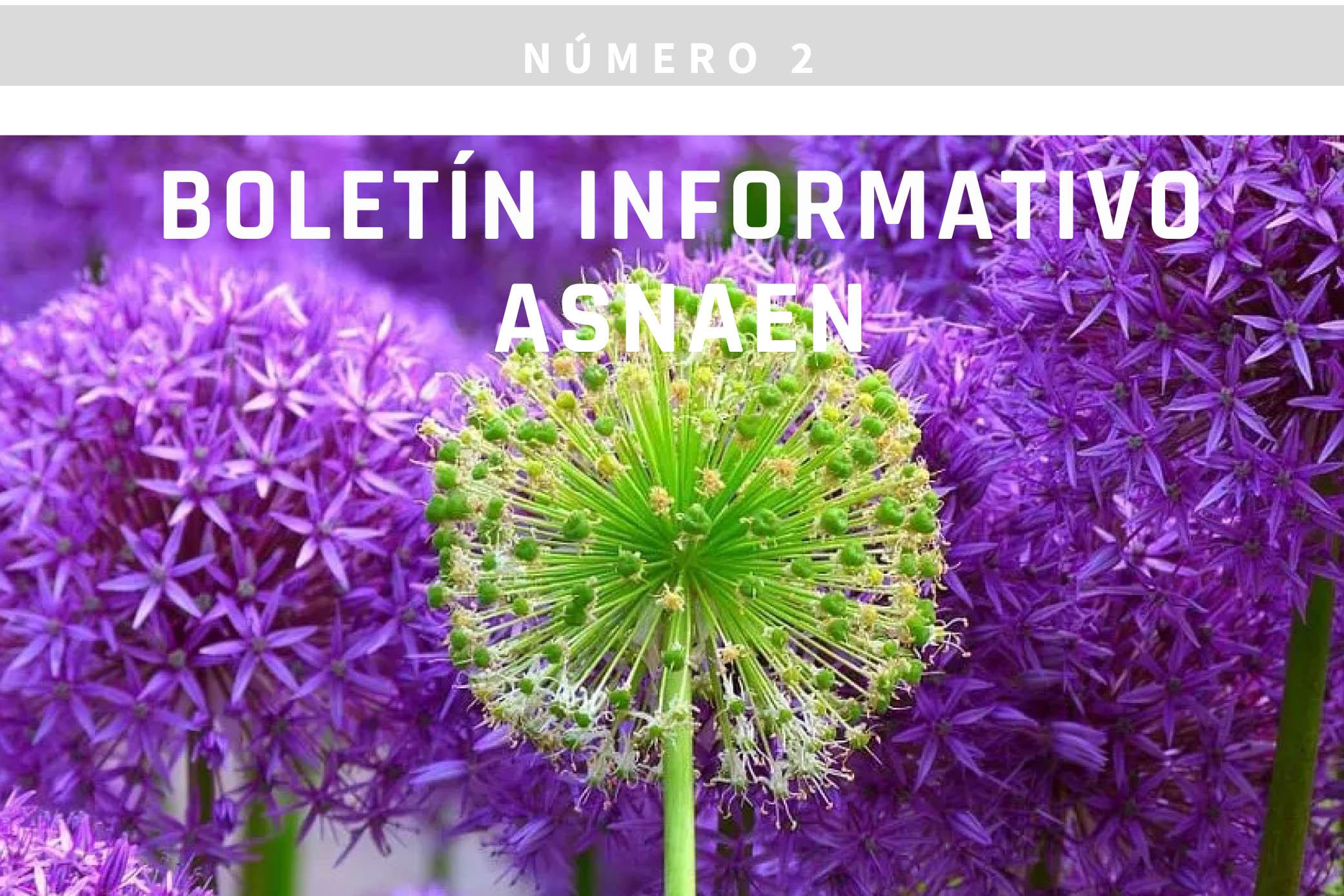 Boletín nº2